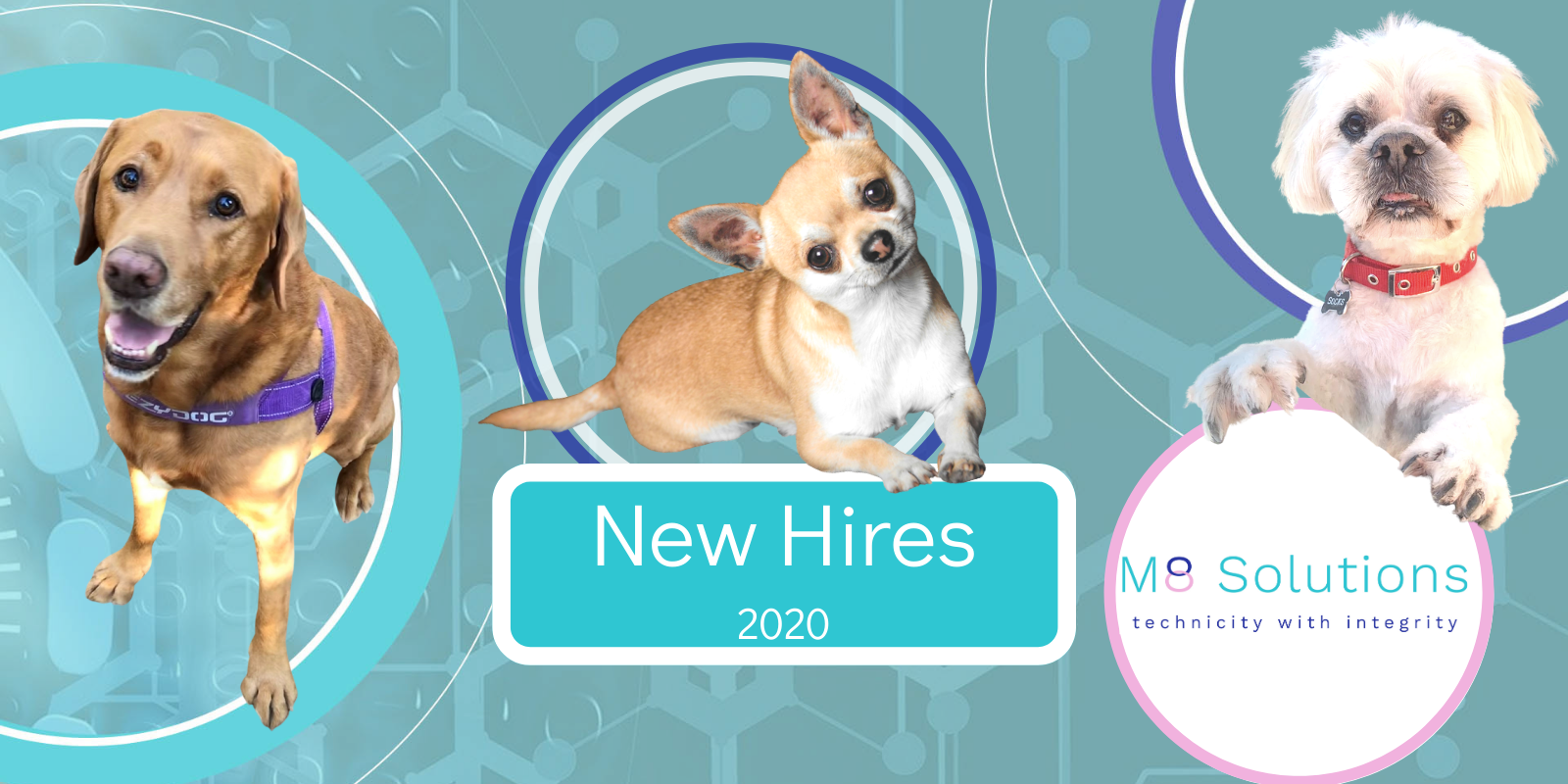 Alfie, Cisco and Socks, new hires for M8 Solutions
